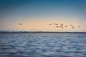 Parque natural delta del Po